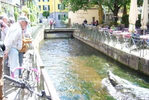 Krokodil in der Dreisam - der Klimawandel in Freiburg
